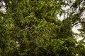 Squirrel In A Branch