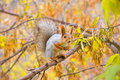 Squirrel on the branch Royalty Free Stock Photo