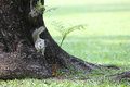 Squirrel on branch of tree with a grass Stock Images