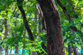 Squirrel climbing tree with blur background