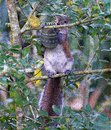 The squirrel climbs a tree with its favorite Easter egg