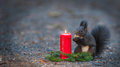 Squirrel is eating a nut near a candle sqirrel sitting next to and merry christmas Royalty Free Stock Photos