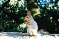 Squirrel eating sunflower seeds Royalty Free Stock Photos