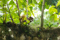 Squirrel eating on a tree branch Royalty Free Stock Images