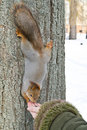 Squirrel eats Stock Photo