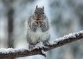 Veverička teší matice
