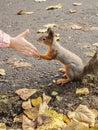 Veverička labky z detské ruka