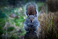 Squirrel in holland park a curious kyoto garden london Stock Images