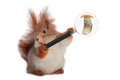 Squirrel with a magnifying lens mushroom on a white background Royalty Free Stock Images