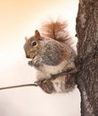 Squirrel in Manhattan Stock Photos