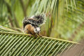 Squirrel on a Palm Branch Royalty Free Stock Photo