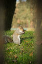 Squirrel in the park on the ground Royalty Free Stock Photos