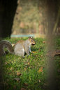 Squirrel in the park on the ground Stock Photos