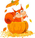 Squirrel in pumpkin Stock Image
