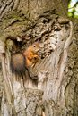 The squirrel sits on a tree Royalty Free Stock Photo