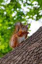 Squirrel sits on the trunk of the tree Stock Image