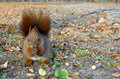 Squirrel standing on the floor hands clasped Royalty Free Stock Photography