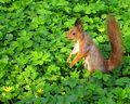 Squirrel stock photos sitting in green grass and eating nuts Stock Photography