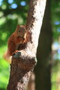 Squirrel stock photos sitting on the tree and eating nuts Stock Photography