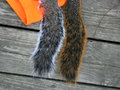 Squirrel tails two s on wood grain and blaze orange background one is a fox and the other a grey Royalty Free Stock Images