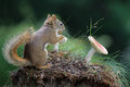 Squirrel with a Toadstool Royalty Free Stock Photo