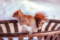 Squirrel on a trash receptacle sitting top of in the snow Stock Image