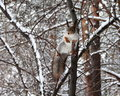 Squirrel on a tree in snowy forest Stock Photos