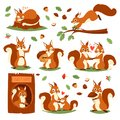 Squirrel vector cute animal jumping or sleeping in wildlife and lovely animalistic couple illustration set of squiring