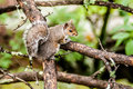 Squirrel in the wilderness north carolina mountains Stock Image