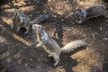 3 Squirrels