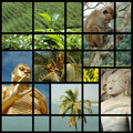 Sri lanka collage with photos of landmarks Royalty Free Stock Photo