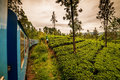 Sri Lanka: famous Ceylon highland tea fields Royalty Free Stock Photo