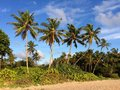 Sri Lanka paradise beach with white sand, Palm trees and a scenic sunset Royalty Free Stock Photo