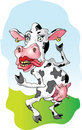 Srta. Cow Imágenes de archivo libres de regalías