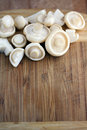 St. George's mushrooms Stock Photo