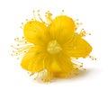 St. John's wort flower Royalty Free Stock Photo