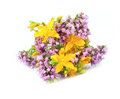 St john s wort and origanum flower on white Royalty Free Stock Image
