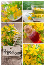 St john s wort tea collage made of beautiful photos with and flowers Stock Image