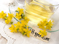 St john s wort tea in the glass cup with fresh flowers Stock Photos