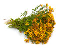 St john s wort on a white background Royalty Free Stock Images