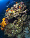 St lucia reef scene with diver swimming Royalty Free Stock Photography