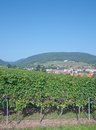 St martin german wine route germany the idyllic village of rhineland palatinate Stock Image