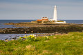 St Marys Lighthouse with daffodils Stock Images