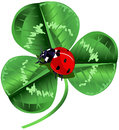 St patrick day three leafed clover and ladybug in the center of the screen for s Stock Photography