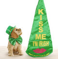 St. Patrick's Day dog Royalty Free Stock Photography
