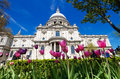 St paul s in the spring cathedral of city of london seen through pink tulips Royalty Free Stock Photo