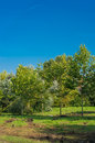 Stabilized planted trees Royalty Free Stock Photo