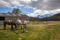 Stable horse and torres del paine chile Royalty Free Stock Image