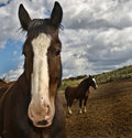 Stable horses big and small Royalty Free Stock Image