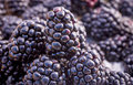 Stack blackberries natural light Royalty Free Stock Image